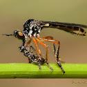 Empididae