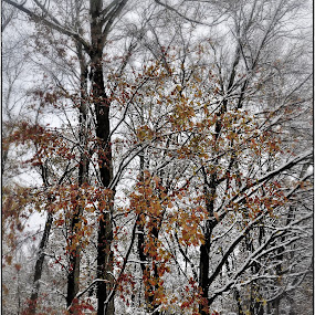 Seasonal Change by Sue Green - Landscapes Forests ( winter, autumn, snow, trees )