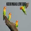 Kicau Burung Love Bird