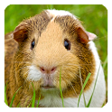 Guinea Pig Live Wallpaper icon