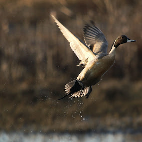 by Doug Skinner - Animals Birds