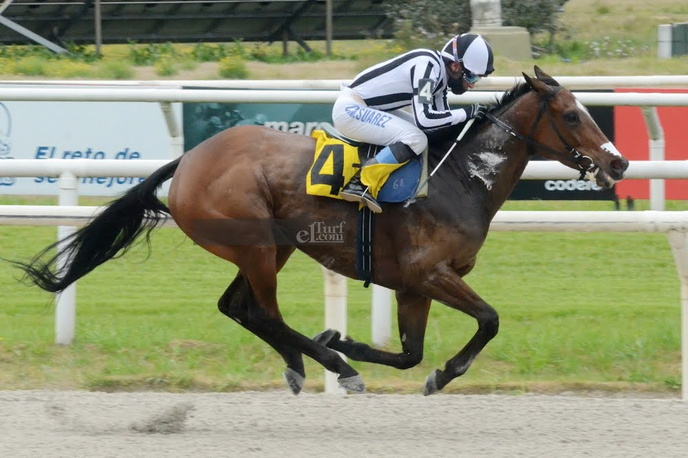 Sentimental (Bluegrass Cat) gana Handicap (1600m-Arena-MAR).