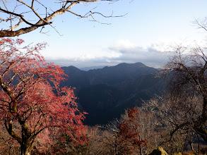 国見岳を望む(左の木は真弓)