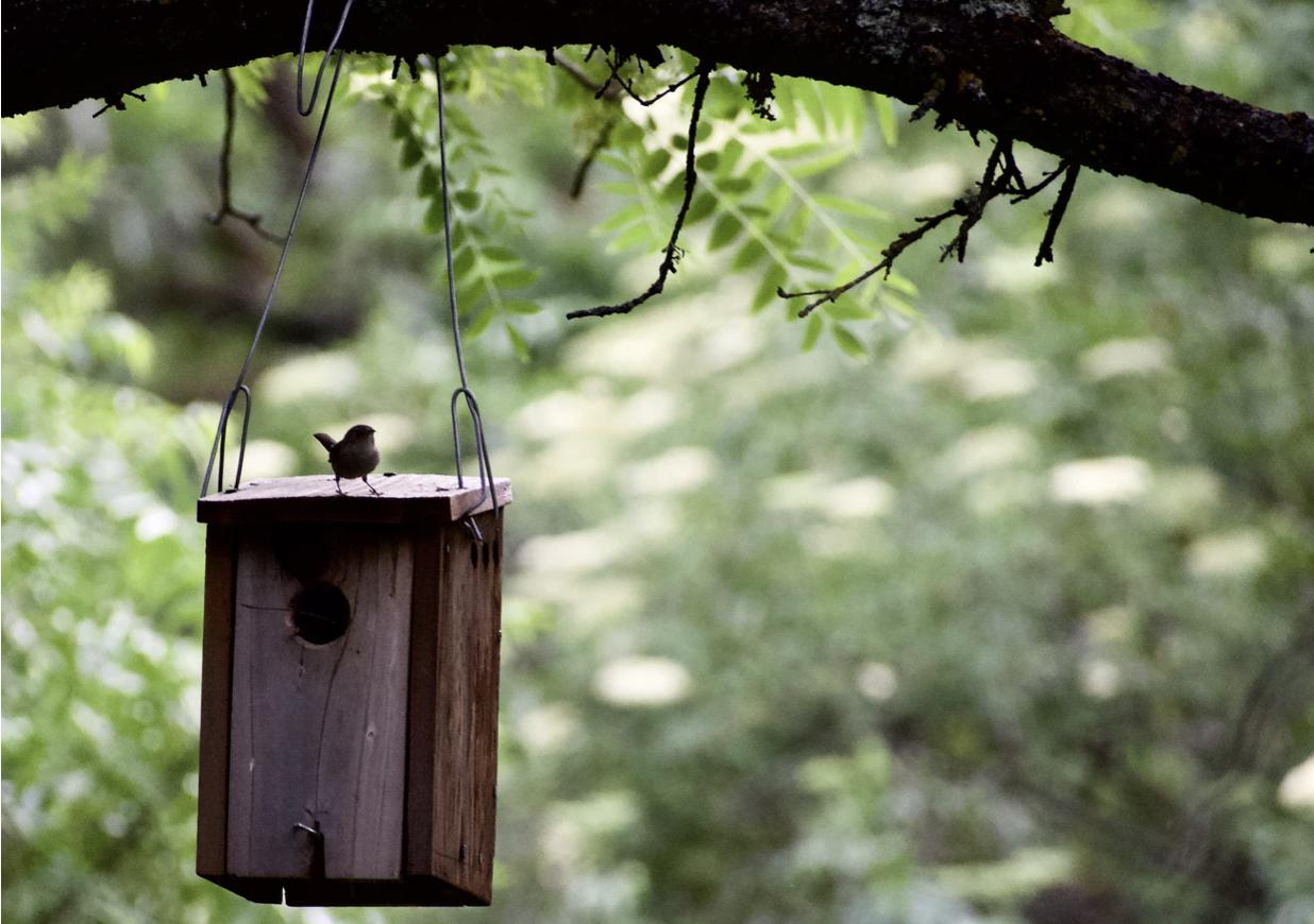 DIY bird feeder guide