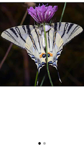Butterflies of Greece - náhled