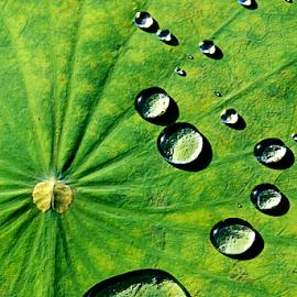 ***** by Steven De Siow - Nature Up Close Natural Waterdrops ( abstract, water, water drops, waterdrops, water droplets,  )