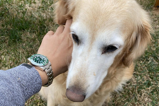 Why A Luxury Watch Is A Better Investment Than A Dog In 2021
