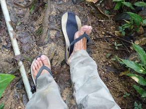 Photo: Tanah Rata, Cameron Highlands - trail 9, overgrown last part of trail, where my flipflop broken