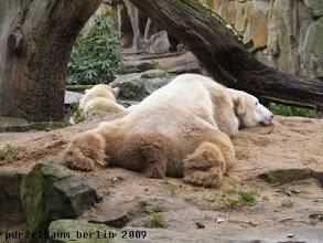 Photo: Knut auf dem Sandhaufen - Gianna in der Schlafkuhle ;-)