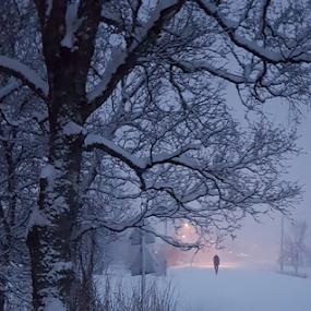 Walking home by Yvonne Reinholdtsen - City,  Street & Park  Neighborhoods ( winter, tree, snow, vesterålen, norway,  )