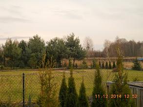 Photo: 11 XII  2014 roku - z widokiem na choineczki .................