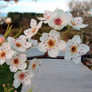 Blossums 2.jpg