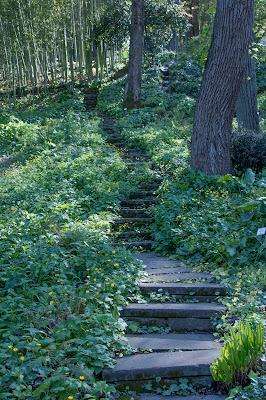 Stairway to Heaven di Michele Tambornino