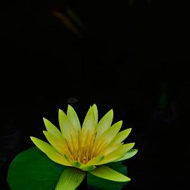 by Gerry Setiawan - Flowers Flower Gardens