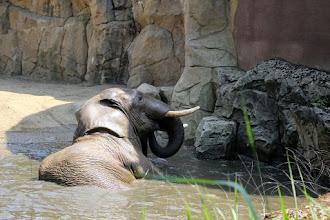 Photo: Zoo Duisburg (2015)