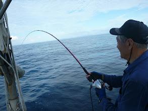 Photo: ウキは、入るが・・・「パックンチョ!」サメにやられるー!