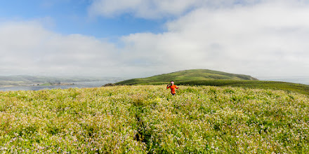 Photo: The trail wound its way through thickets of wildflowers near Tomales Point