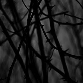 hostile area by Thurisaz Photography - Black & White Abstract ( outdoor, thorns, mood, nature, shapes, gloomy, dark, black and white, darkness,  )