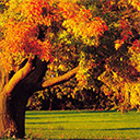 Autumn Wallpapers New Tab