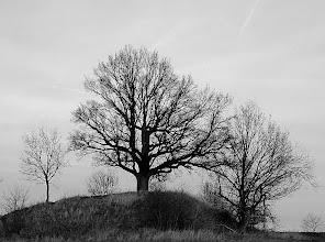 Photo: three trees  #nature  #trees  #simple  #bw  #blackandwhitephotography