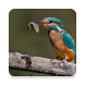 Birds Of Europe image