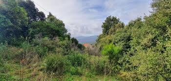 terrain à Petreto-Bicchisano (2A)