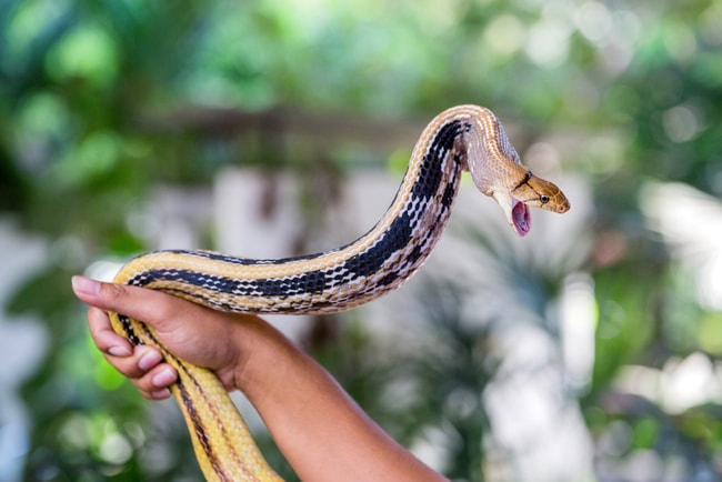 Watch out for snakes, expert warns as heavy rain brings increased reptile activity - SowetanLIVE