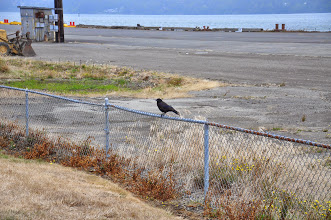 Photo: Sitting on the fence!