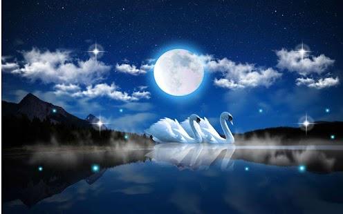 Swans Night - náhled