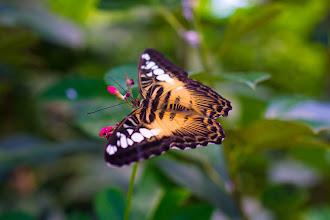 Photo: A Little Bit Weightless - Butterfly at Butterfly Wonderland, Scottsdale