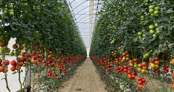 6 de cada 10 hortalizas que se comen los europeos se cultivan en los invernadero