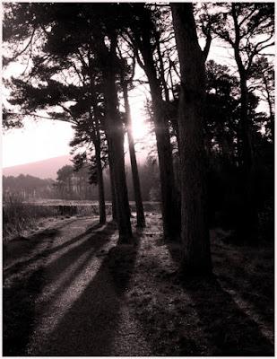 Nascosto tra gli alberi di silvergdb