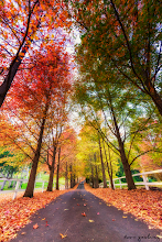 Photo: Loove this driveway