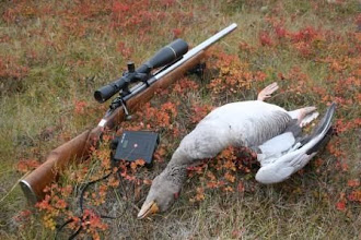 Photo: Varmint rifle cal.222 BRS. Owner Hjalti Stefansson makes many head shots at 150 to 230 meters with this rifle. Win 70 Action,Hart Barrel. Leupold scope. Rifle is Pillar Bedded !