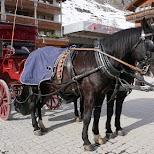 Horse carrage in Switzerland in Zermatt, Valais, Switzerland