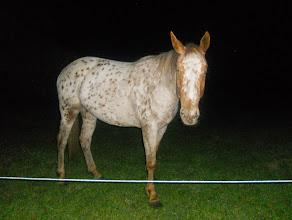 Photo: Retour de nuit au gîte accueuilit par le cheval local.