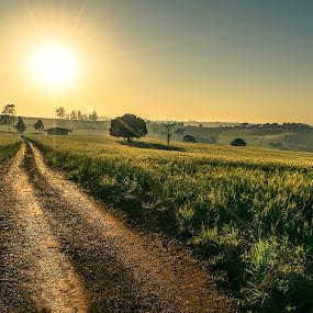 Amarillo by Matheus Dalmazzo - Landscapes Prairies, Meadows & Fields ( fazenda, itapetininga, hdr, trigo, sol, sun )