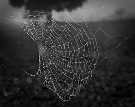 Photo: This morning dawned cloudy. Well, good chance to shoot webs.