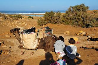 Photo: Bivouac - les tentes sont pliées, les dromadaires chargés. Prêts pour le départ !