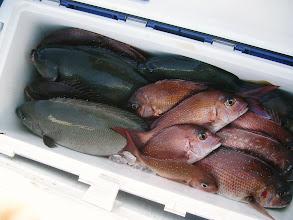 Photo: オカムラさんの釣果です! オナガ混じって2ケタオーバーしました!