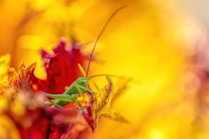 I colori della natura di Sara Jazbar