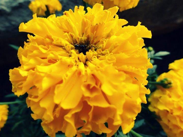 Big, yellow flower  di Anastasia Trossi