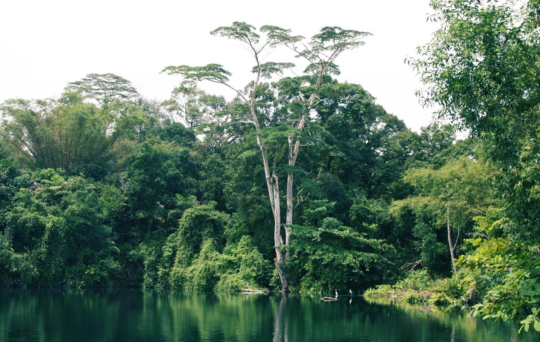 Khám phá Singapore - nhất định phải check-in 5 nơi này - ảnh 13