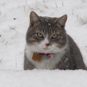 Speedy's life by Paul Popovici - Animals - Cats Portraits