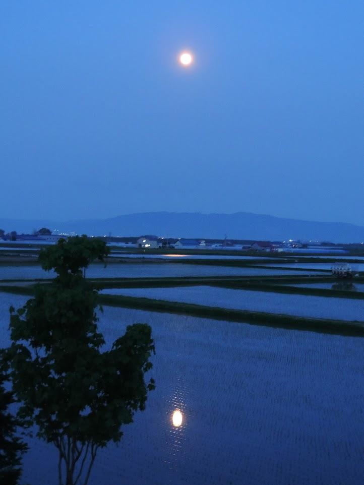 「夕景の月」心洗われる月が、田植え直後の水面に映りました。