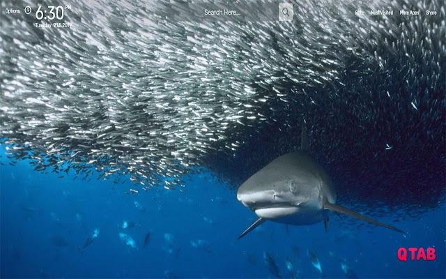 Shark Wallpapers HD Theme