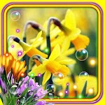 Crocusses and Narcissus Flowers Live Wallpaper icon