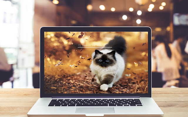Himalayan Cats and Kitten Wallpaper Pet Theme