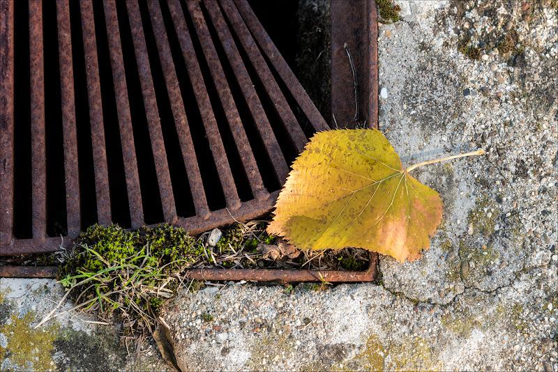 presagio d'autunno di francescafiorani