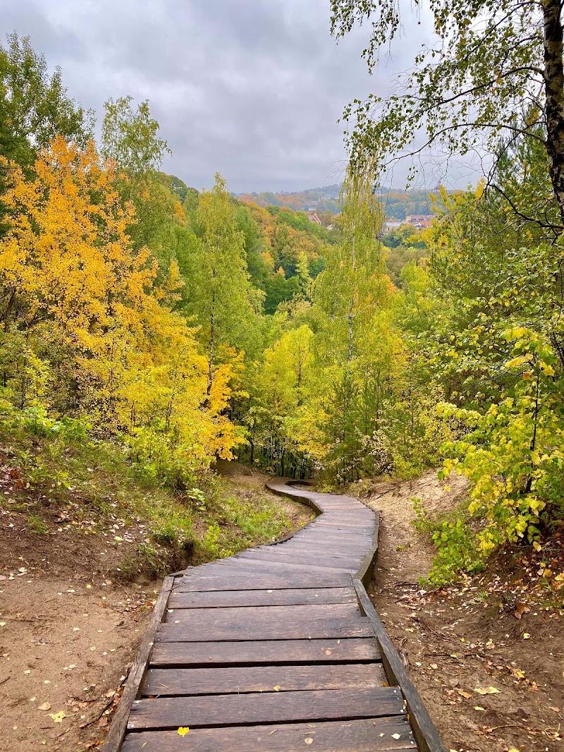 Walk on the wood  di gaiaferra